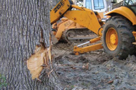 Tree preservation reports from New Day Arborist can tell you if this tree that lost a section of bark is at risk for being lost.
