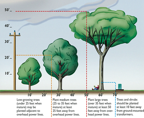Tree planting illustration with appropriate distances provided by New Day Arborist & Tree Service of Portland, OR