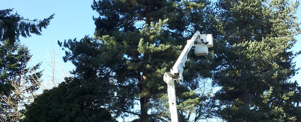 New Day Arborist can tackle the hardest jobs and keep your trees healthy.