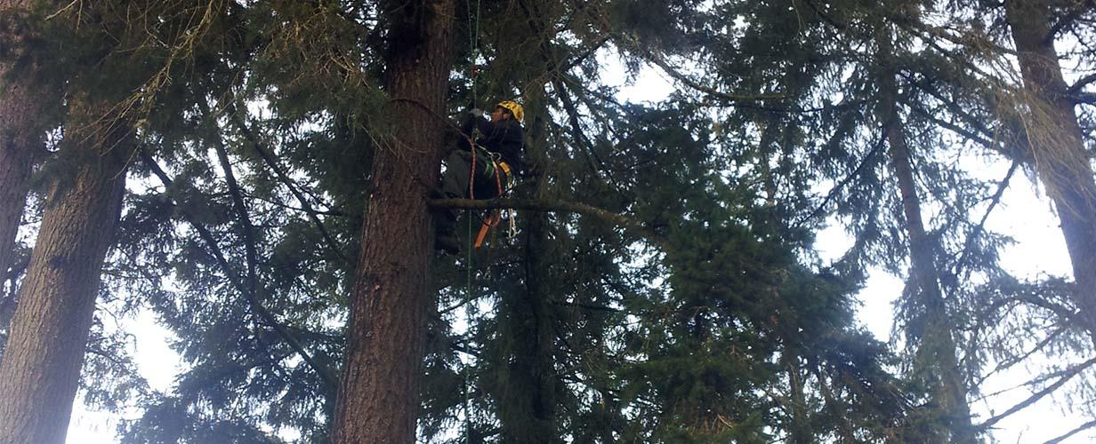 Beautiful trees in NW Washington