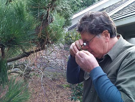 At New Day Arborist & Tree Service, we care about tree health in Vancouver, WA