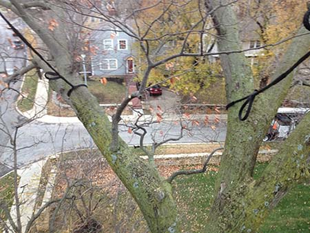 tree support systems by New Day Arborist & Tree Service