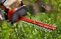 Hedge trimmer trimming a hedge