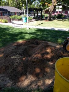 After stump removal before clean up done by New Day Arborist & Tree Service of Vancouver, WA.