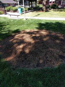 Beautifully clean following stump removal done by New Day Arborist & Tree Service in Vancouver, WA.